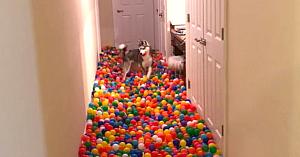 Câinele este copleşit de fericire atunci când stăpânul îi dezvăluie surpriza pregătită special de ziua lui