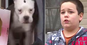 Intrusul mascat atacă cu un băieţel de 9 ani rămas singur acasă, dar nu avea nicio idee că patrupeda familiei se afla în apropiere