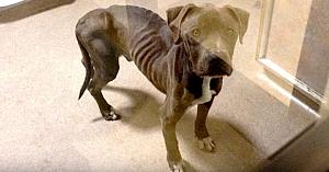 Proprietarii şi-au lăsat câinele în curte să moară de foame, apoi o femeie a văzut o fotografie cu el