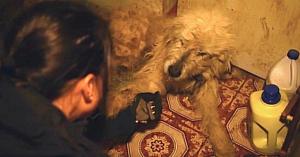 Un câine neglijat şi abuzat are o reacţie înduioşătoare atunci când salvatoarea întinde mâna spre el
