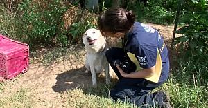 Un câine înlănţuit care ajunsese să mănânce pietre pentru a supravieţui, înduioşează inima uneia dintre salvatoare