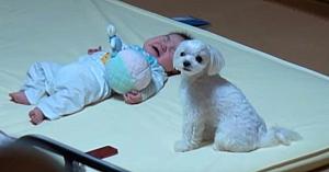 Bebeluşul este tare supărat în timp ce mama lui filmează reacţia amuzantă a câinelui în faţa acestei situaţii