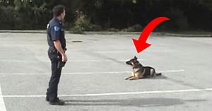 Ofiţerul de poliţie face dintr-o dată un mic gest - răspunsul incredibil al câinelui nu seamănă cu nimic din ce aţi mai văzut