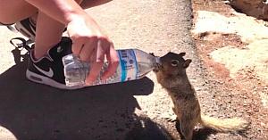 Aflat în vizită la Marele Canion, acest turist întâlneşte o veveriţă. Ce a surprins pe camera a devenit viral peste noapte