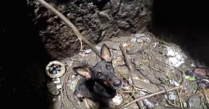 Această biată căţeluşă fusese aruncată într-un puţ dezafectat şi lăsată să sfârşească. Priviţi momentul emoţionant când este salvată!