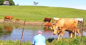Bărbatul filma o turmă de vaci când brusc îşi dă seama că una dintre ele încearcă cu disperare să-i atragă atenţia...