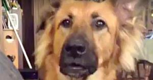 Stăpâna nu vrea să-i facă pe plac câinelui, iar reacţia acestuia nu seamănă cu nimic din ce aţi mai văzut până acum