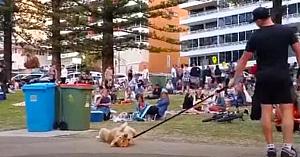 Câinele refuză să părăsească parcul, transformând totul într-o scenă care i-a făcut pe toţi să râdă cu poftă