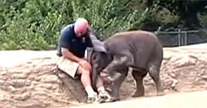 Puiul de elefant îl vede pe îngrijitorul său preferat. Reacţia lui imediată a înduioşat o lume întreagă