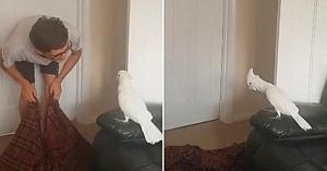 Acest tânăr face o scamatorie şi dispare din faţa papagalului. Reacţia păsării este adorabilă