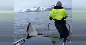 Fluieratul acestui bărbat atrage orcile curioase, apoi surprinde în imagini o experienţă pe care o trăieşti o dată în viaţă
