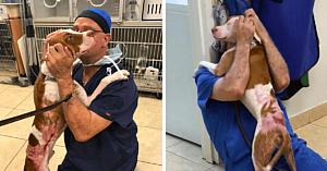 Câinele găsit legat de copac şi plin de arsuri are cea mai emoţionată reuniune cu veterinarul care l-a salvat