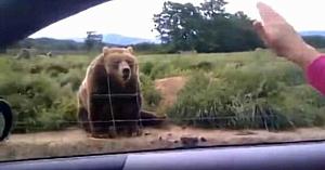 Femeia salută un urs uriaş - Priviţi răspunsul neaşteptat al acestuia 1 secundă mai târziu