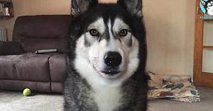 Acest câine are cea mai frumoasă reacţie când află că prietenul lui cel mai bun vine în vizită