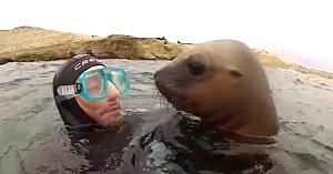 O focă îşi înfrânge toate temerile şi le oferă acestor scafandri un moment memorabil