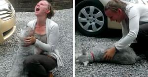 Un Schnauzer pierdut de mult timp se revede cu proprietara - câinele aproape că leşină de bucurie