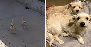 Doi câini fără stăpân se ascundeau în curtea şcolii de mai multe săptămâni, până când persoana perfectă vine să-i salveze