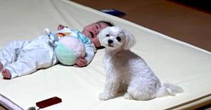 Mama nu a putut să-şi oprească copilul din plâns - Tehnica specială a câinelui a adunat 8 milioane de vizualizări!
