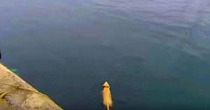 Acest câine dispărea cu orele în fiecare zi - câteva luni mai târziu, el sare în apă şi dezvăluie marele său secret