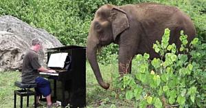 Un elefant abuzat în vârstă de 80 de ani nu-şi poate reţine lacrimile atunci când acest bărbat îi cântă la pian