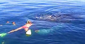 """O familie salvează o balenă cu cocoaşă, dar nimeni nu se aştepta la uimitorul """"mulţumesc"""" de la final"""