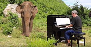 Bărbatul duce un elefant orb către un pian instalat în pădure - dar în momentul în care începe să cânte, totul ia o turnură neaşteptată