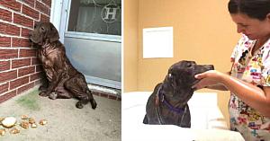 Acest câine fără adăpost nu a avut niciodată parte de o baie caldă. Acum, priviţi-i reacţia când este răsfăţat pentru prima dată