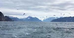 Turistul filma un stol de pescăruşi - când surprinde o scenă de o frumuseţe care îţi taie respiraţia