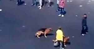 Un imbecil aruncă cu pietre în doi câini nevinovaţi - apoi primeşte o lecţie pe care nu o va uita niciodată