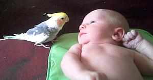 Priviţi ce-i face acest papagal, bebeluşului nou-născut - de fiecare dată când vine ora de culcare