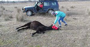 Veterinarul eliberează calul înlănţuit fără să aibă nicio idee că va avea parte de experienţa vieţii lui