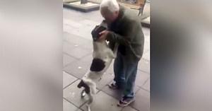 Bărbatul primeşte un apel despre un câine al străzii, merge să-l vadă şi descoperă că era bunul său prieten dispărut