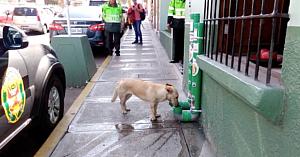 Autorităţile din Peru au început instalarea acestor dozatoare. Iată cât de utile le sunt câinilor fără stăpân
