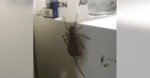 Bărbatul vede un păianjen uriaş căţărându-se pe frigider. Apoi observă şoricelul pe care îl căra cu el
