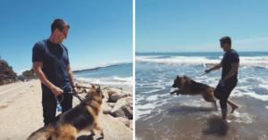 """Un Ciobănesc German salvat vede oceanul pentru prima dată şi nu se poate abţine să nu """"plângă ca un om"""""""