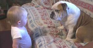 """Bebeluşul îi adresează """"cuvinte"""" dure Bulldog-ului familiei - Reacţia neaşteptată a câinelui este pur şi simplu minunată"""