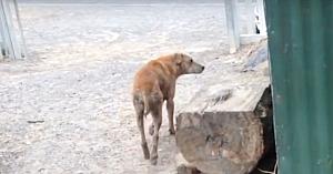 Au mers să salveze un câine al străzii: însă nu se aşteptau ca acesta să nu vrea să plece fără cel mai bun prieten al său