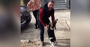 Acest Beagle a stat 18 luni în grija soţiei. Reacţia câinelui când îşi revede stăpânul este copleşitoare