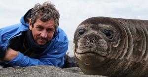 Jurnalistul întâlneşte un pui de focă şi are parte de una dintre cele mai remarcabile experienţe din viaţa lui