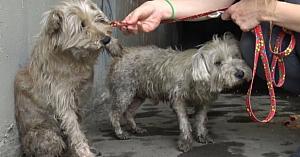 Doi câini abandonaţi în canalizare plângeau după ajutor, până când sunt auziţi de nişte copii