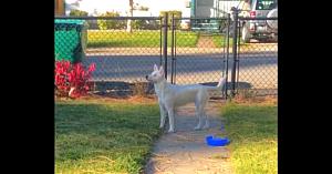 Acest câine surd şi lipsit de vedere simte că stăpânul vine acasă. Reacţia patrupedului a ajuns virală