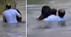 A observat o maimuţă care se îneca în incinta grădinii zoo... Gestul lui îi lasă pe toţi fără cuvinte