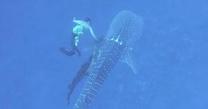 O familie hawaiiană observă un rechin strangulat cu o frânghie. Acum, gestul lor este aplaudat de o lume întreagă