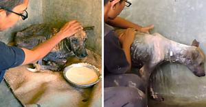 Salvatoarea îngrijeşte câinele găsit aproape fără viaţă. Şase săptămâni mai târziu e de nerecunoscut